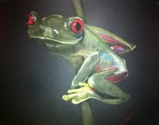 Red Eyed Green Tree Frog on Stem