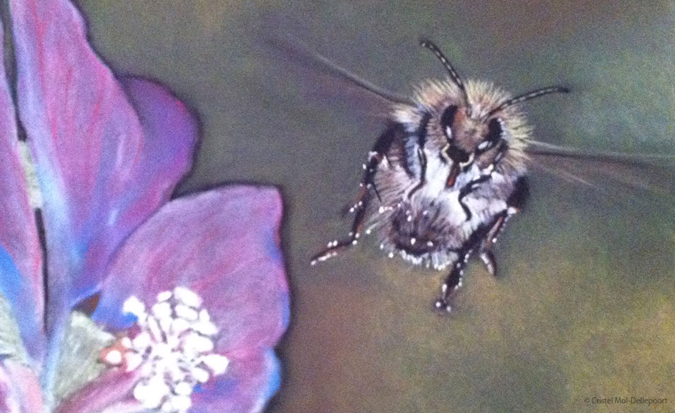 Pastel Drawing of Bumblebee Hovering over Pink Flower