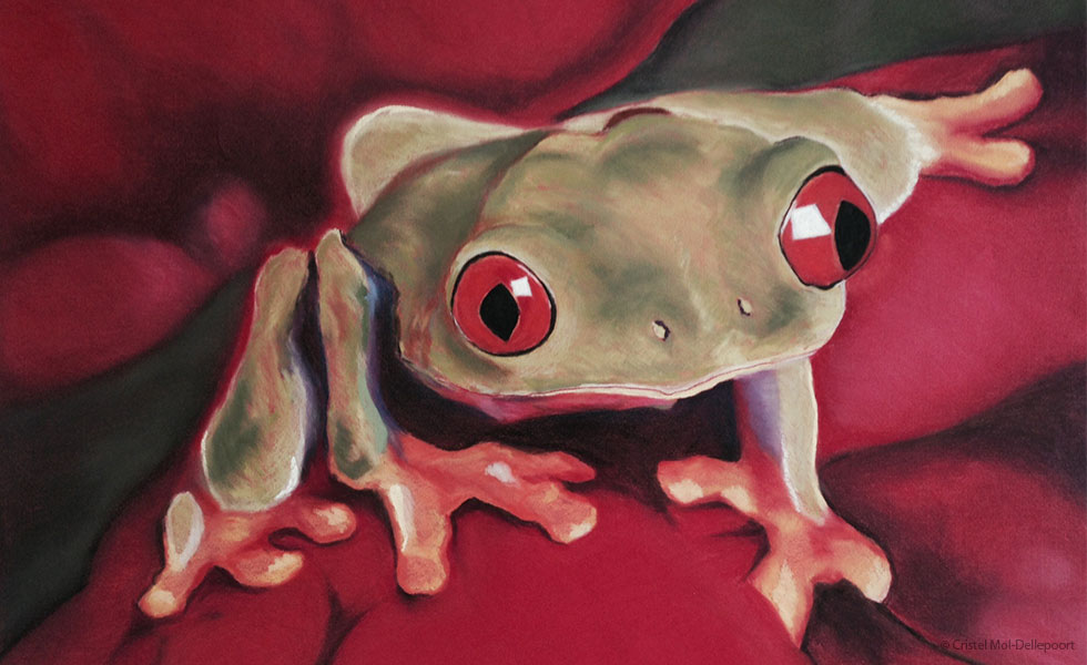 Pastel Drawing of Red-Eyed Tree Frog on Red Leaf