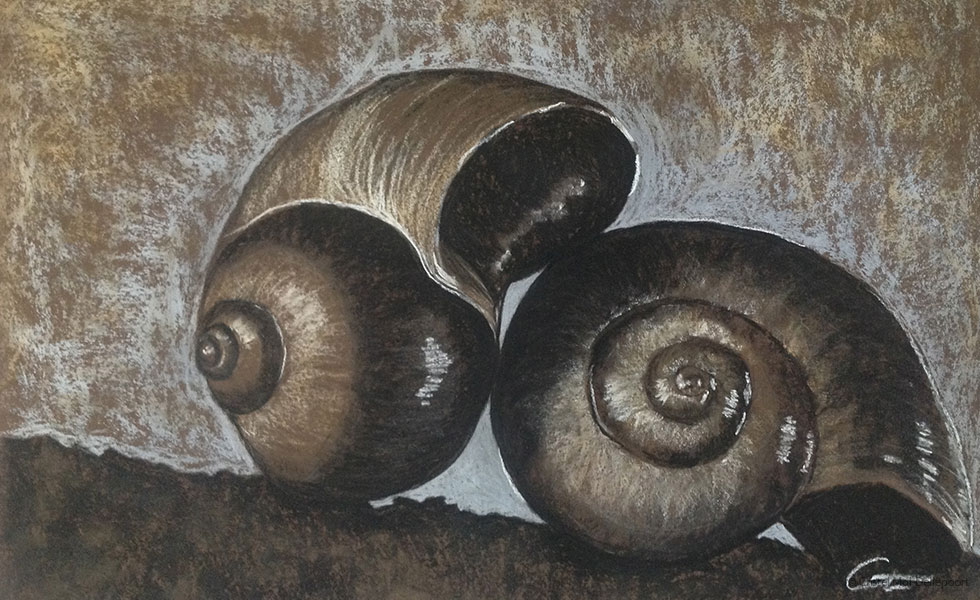 Pastel Drawing of Nautilus Sea Shells