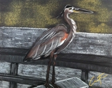 Heron on Hunting Island Fishing Dock