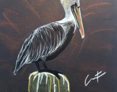 Brown Pelican at Shrimp Dock