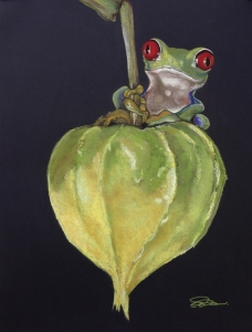 Red-eyed Tree Frog on Seed Pod