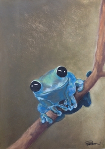Black-eyed Blue Tree Frog on a Branch.