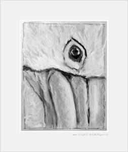 pelican-gaze-study-bw-pastel-cmd