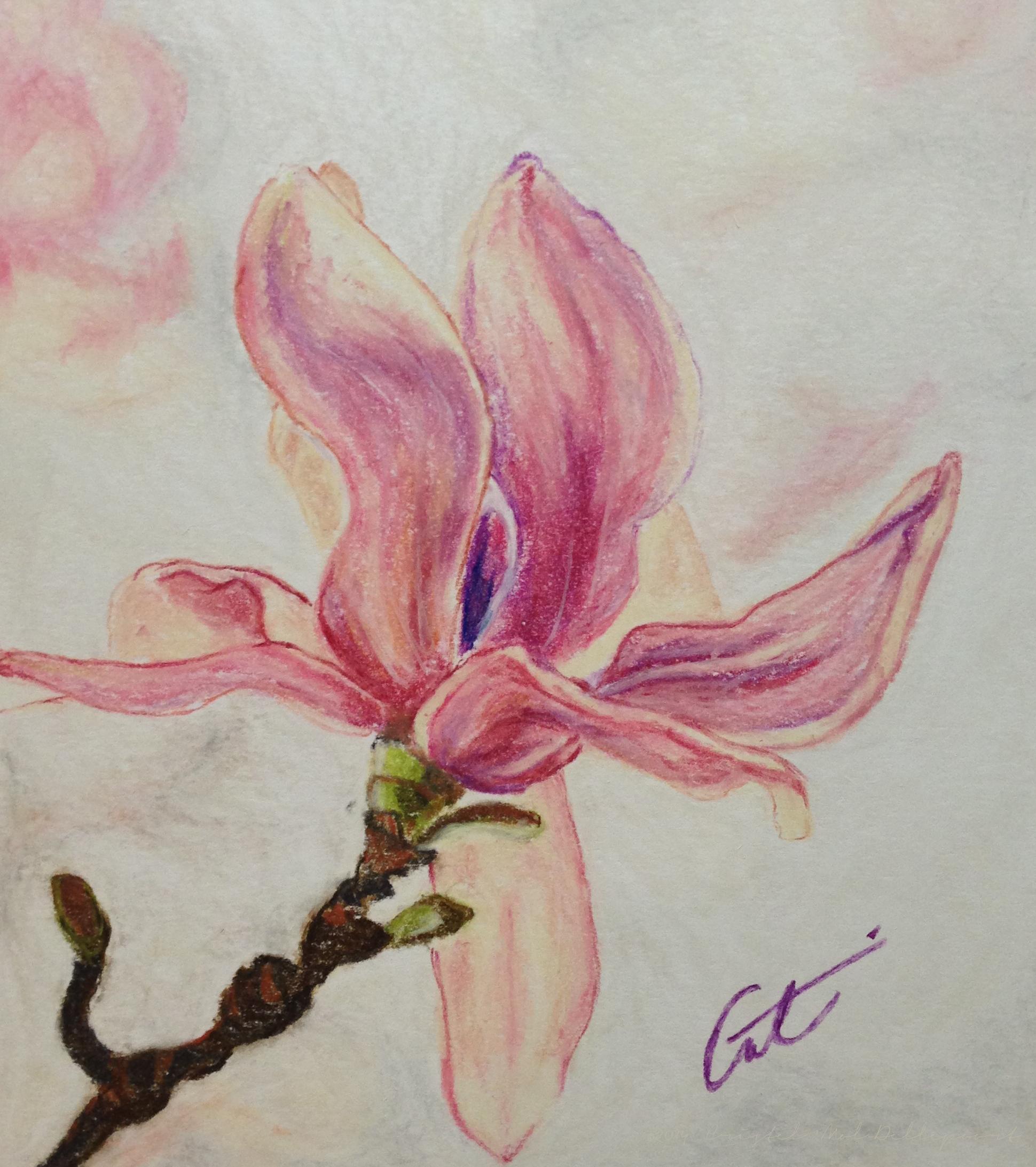 magnolia-flower-pastel-cmd