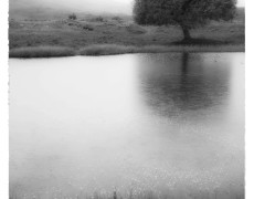 Misty Morning by the Pond